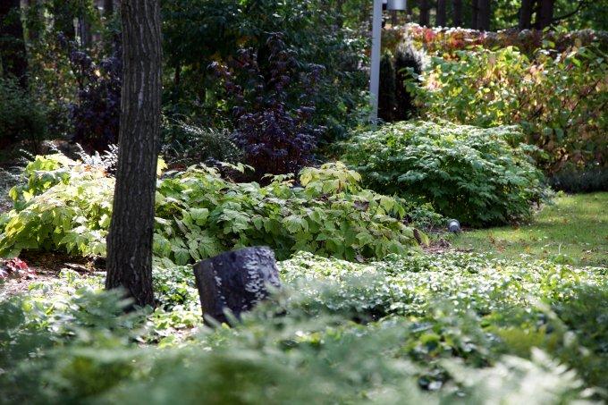 leśny ogród jesienią