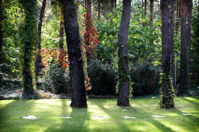 pod koronami drzew