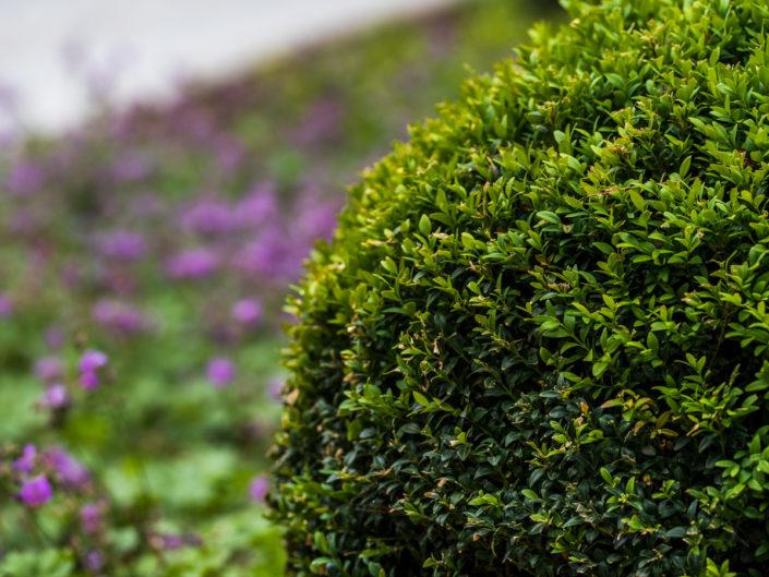 cięte rośliny