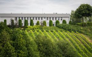 winorośla