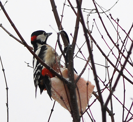 Ptaki w ogrodzie – ogród dla ptaków