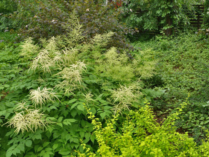 wysokie byliny i krzewy w leśnym ogrodzie