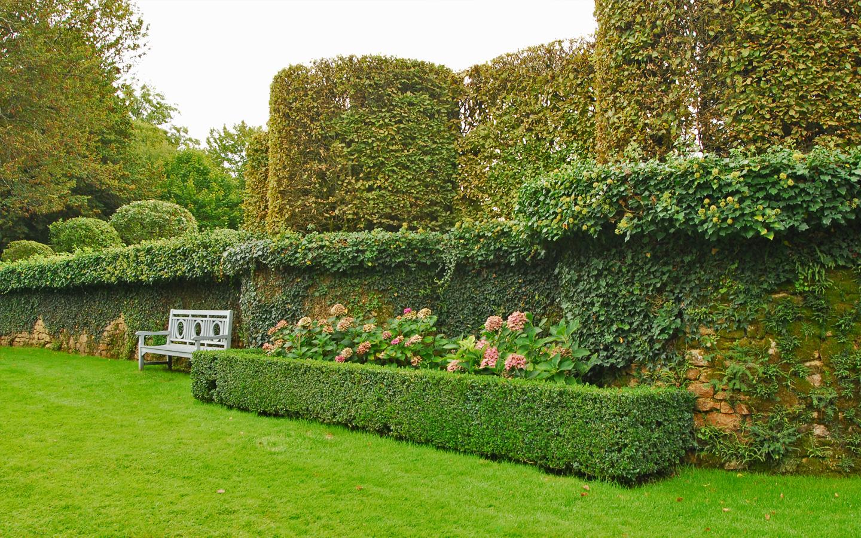 ławka postawiona u podnuża muru obrośniętego bluszczem z widokiem na trawnik