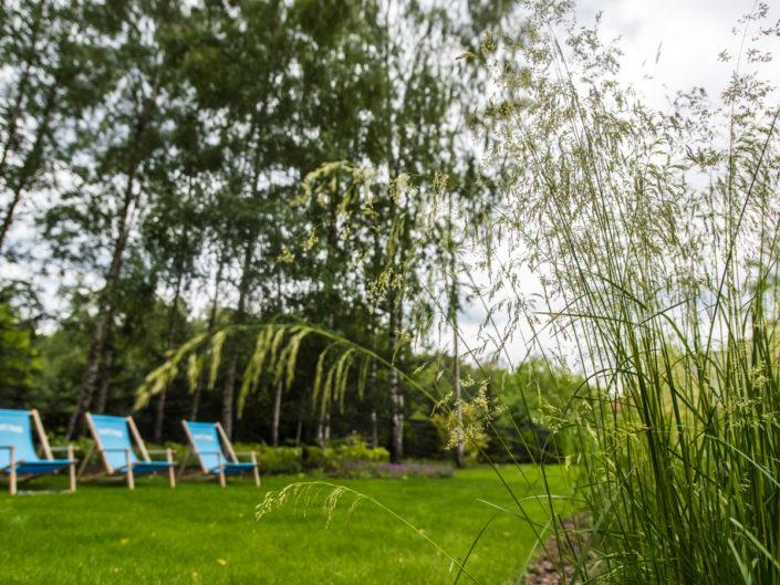 trawnik w otoczeniu bylin i traw