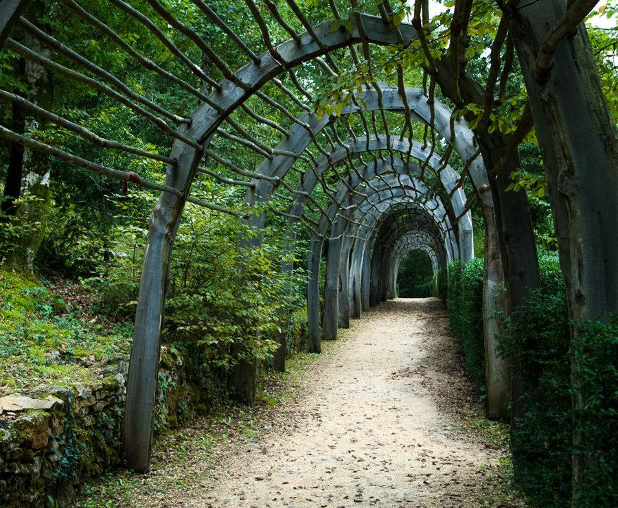 tunel - trejaż pod pnącza