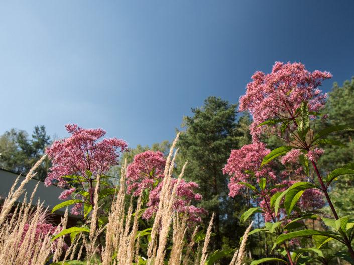 wysokie byliny w ogrodzie