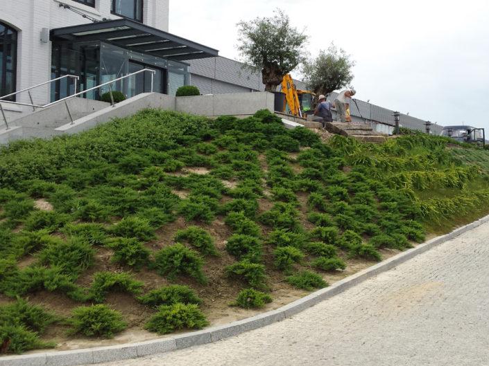 sadzenie roślin na skarpach