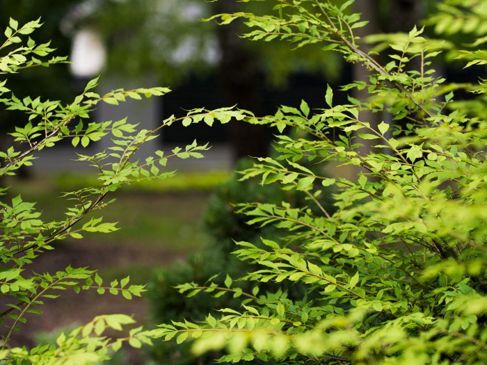 krzewy w ogrodzie