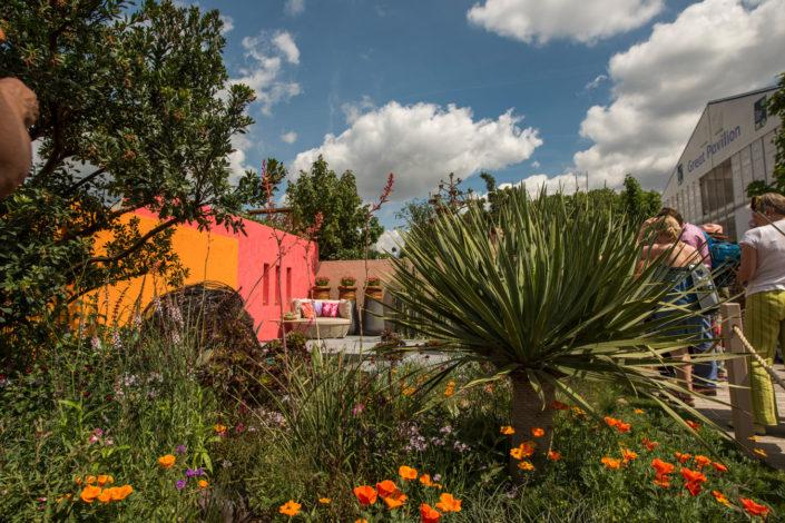 ogrod o intensywnych kolorach
